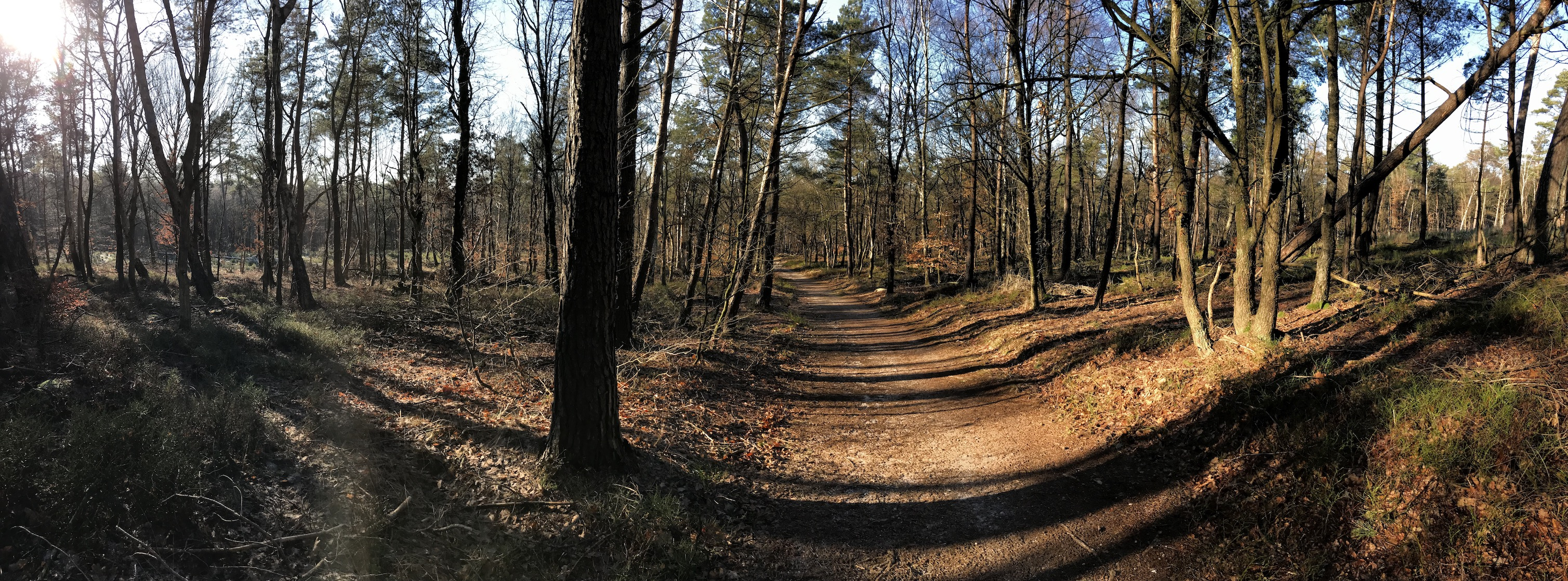 4 beautiful trail runs near Amsterdam